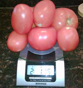 Two_pounds_maters_onscale