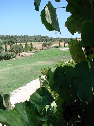 Tuscanolivefarm